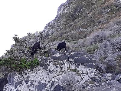 BH-goats.jpg: 2064x1548, 379k (2019 Feb 04 05:16)