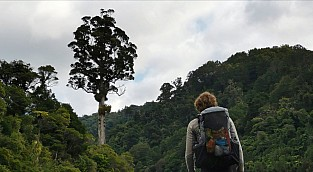 Genetic diversity of New Zealand's forests