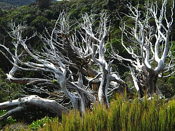 Twisted Taranaki Trees - Daniel Rogerson.jpg: 1024x768, 1082k (2014 Jul 21 06:40)