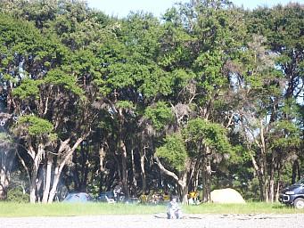 2011-11-27 07.46.05 P1020983 Simon Morison Bush campsite.jpeg: 4000x3000, 6858k (2014 Jul 21 06:45)