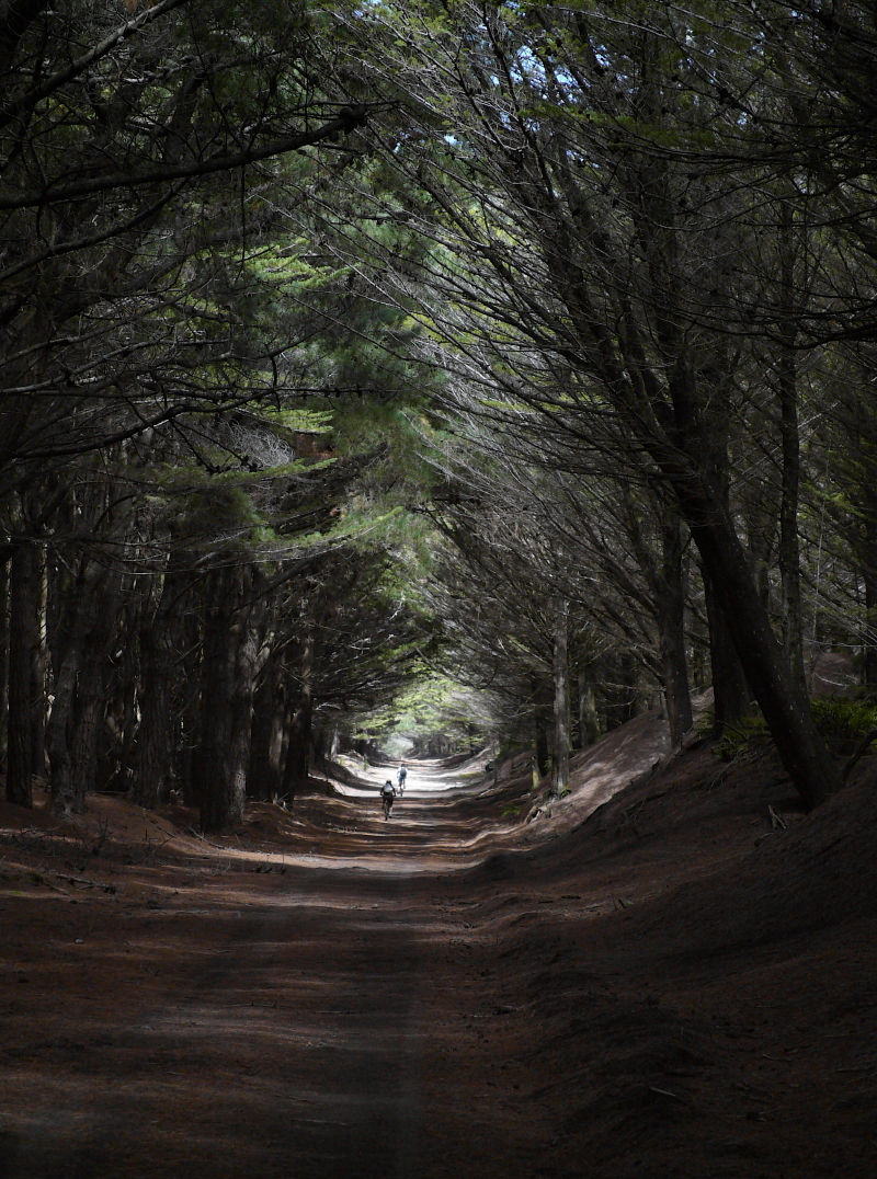 click on the photo to download the original image  BBL-Peter Barber-Tunnel in the Trees