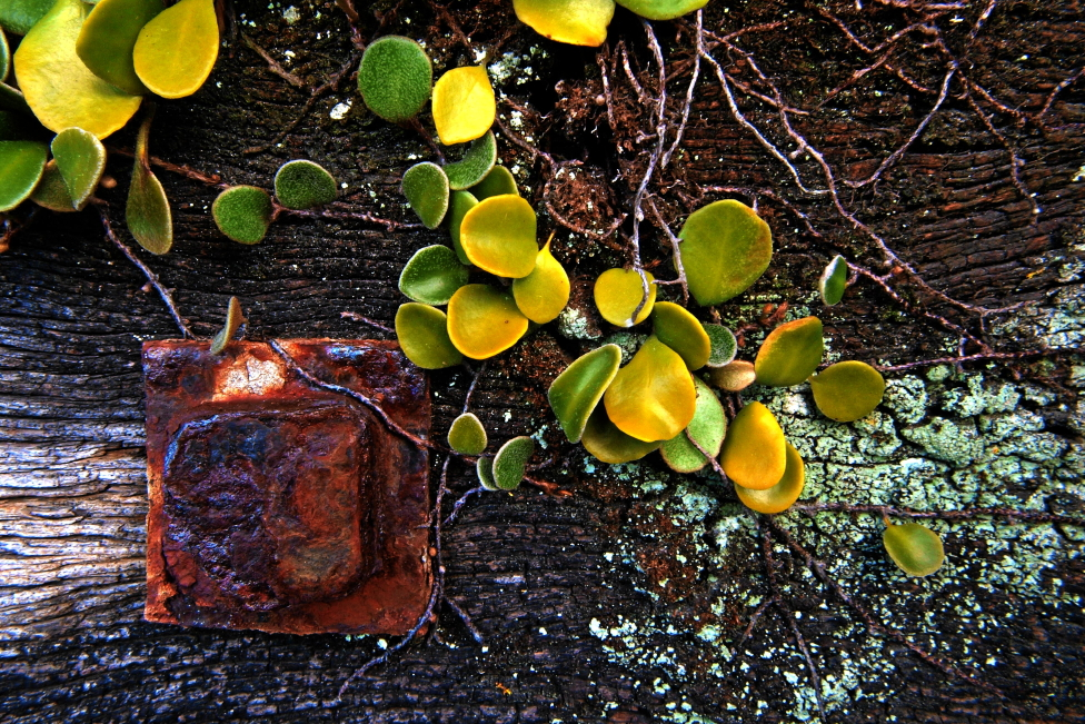 click on the photo to download the original image  NFF-Syd Moore- Fern lichen and...