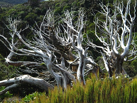 click on the photo and click again on the photo to download the original image  Twisted Taranaki Trees - Daniel Rogerson