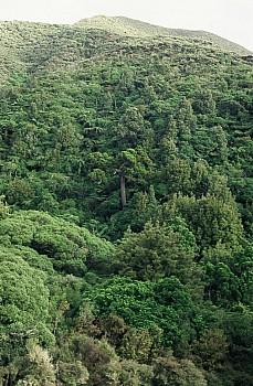 Warrens Bush, South Makara, photograph by Barbara Mitcalfe