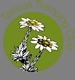 ttc-roundel.png: 75x80, 9k (2014 Jul 21 07:52)